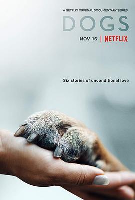 爱犬情深 第一季